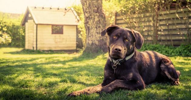 maison votre territoire pas celui du chien