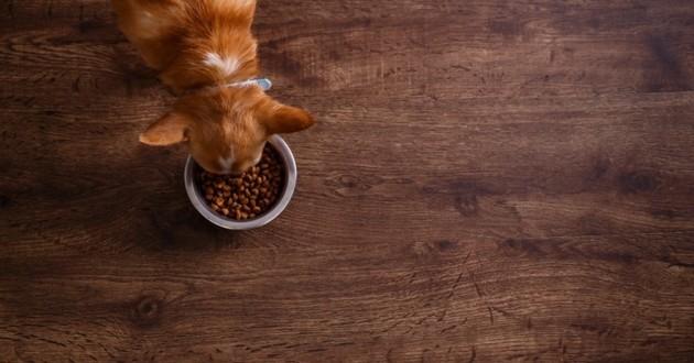 règles de l'alimentation du chien