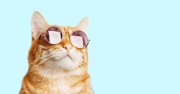 Chat avec des lunettes