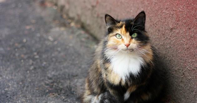 alimentation chat agé