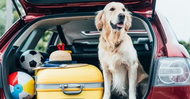 chien voyage emporter