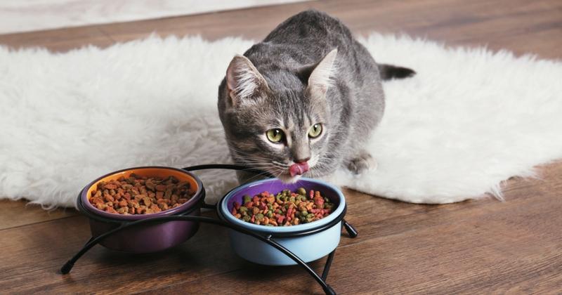 Que donner à manger à un chat