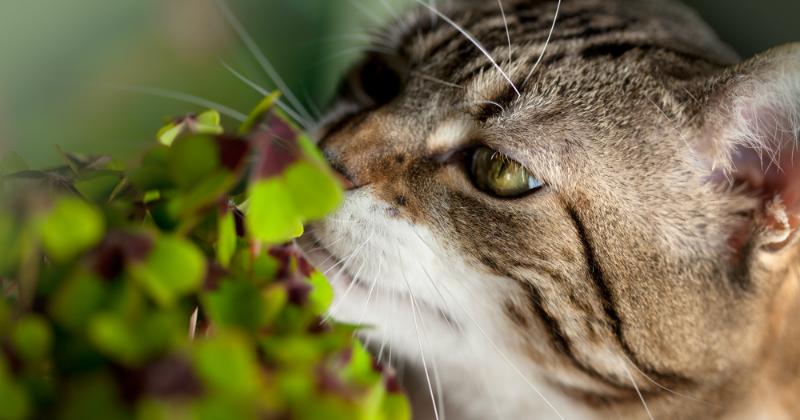 plantes toxiques pour le chat - accidents chez le chat - wamiz