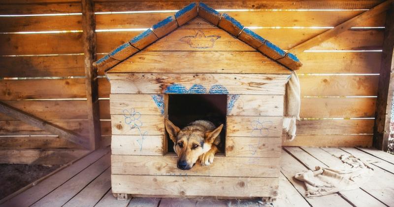 niche pour chien bien la choisir pr parer l 39 arriv e du. Black Bedroom Furniture Sets. Home Design Ideas