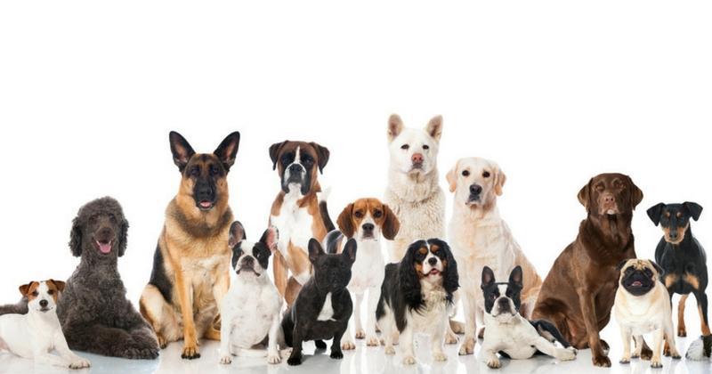 conseils pour bien choisir la race de son chien races de chiens wamiz. Black Bedroom Furniture Sets. Home Design Ideas