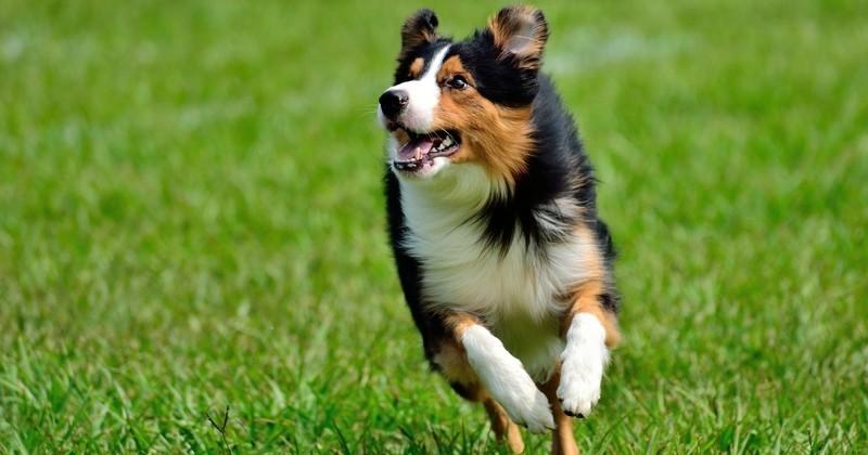 collier pour chien qui s'enfuit