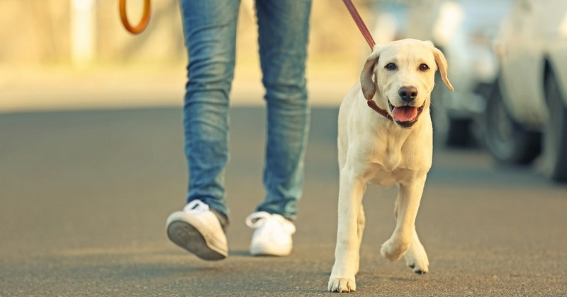 comment adopter un chien crit res pour choisir son chien wamiz. Black Bedroom Furniture Sets. Home Design Ideas