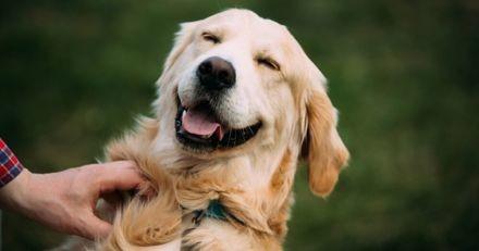 Cures pour renforcer l'immunité de son chien