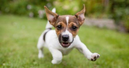 Probiotiques pour la santé de son chien