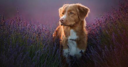 Soigner la gastro-entérite de son chien avec des soins naturels