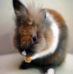 etiquette-aliment-lapin