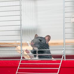 rat-cage