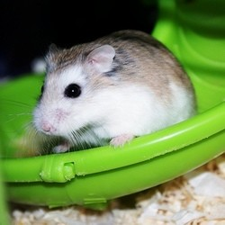 accessoires hamster