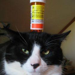 donner médicament chat