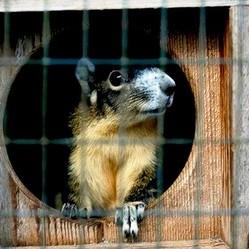 alimentation ecureuil captivite