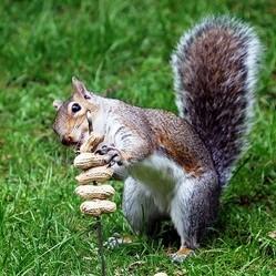 alimentation ecureuil nature
