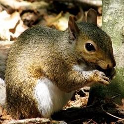 amandes arachides ecureuil