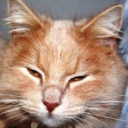 améliorer vieillesse chat