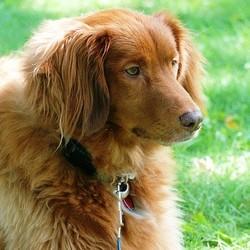 soigner naturellement angine chien