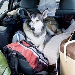 apprendre a son chien a voyager