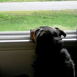 apprendre la garde a votre chien