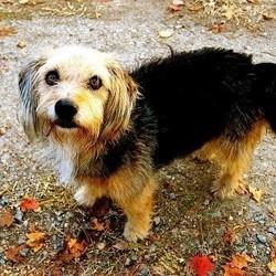 apprendre à son chien à faire pipi dehors