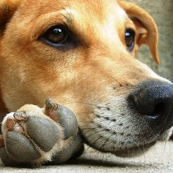 apprendre la solitude a son chien