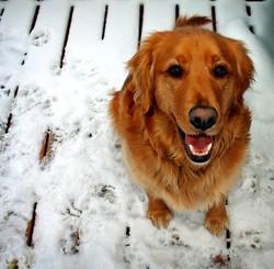 apprendre ordre debout chien