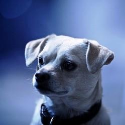 apprendre ordre pas bouger chien