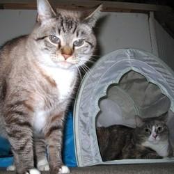 arrivée chat maison