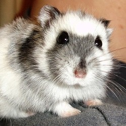 arrivee hamster maison
