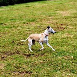 arthrose du chien soins naturels