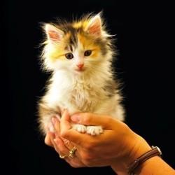 Acclimatation du chaton accueillir son chat wamiz for Arrivee chaton a la maison