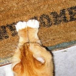 accueillir-nouveau-chat