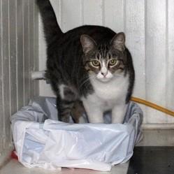choisir bac litière chat