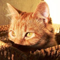 choisir panier chat