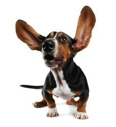mutuelle chien sans carence