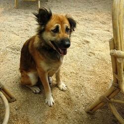 bronchite chien soins et remèdes naturels