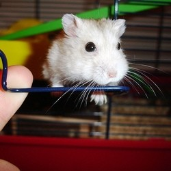modeles cage hamster