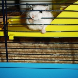 cage pour hamster