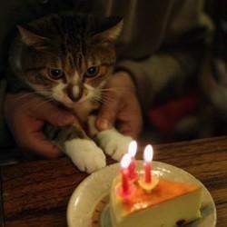 calculer âge chat