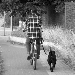 cani cross chien velo