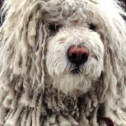 caracteristiques psychiques du chien