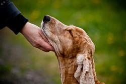 caresser son chien