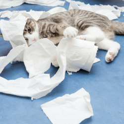 allergies aux chats