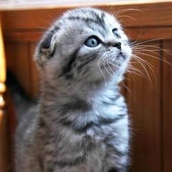 chat combien ça coûte