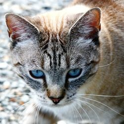 la diarrhée du chat causes la soigner