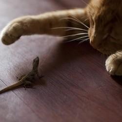 chat ne veut plus jouer