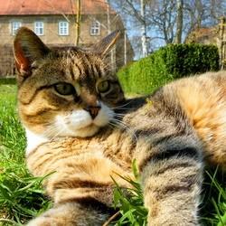 chat renaissance