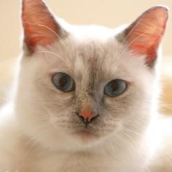 chat siècle des lumières